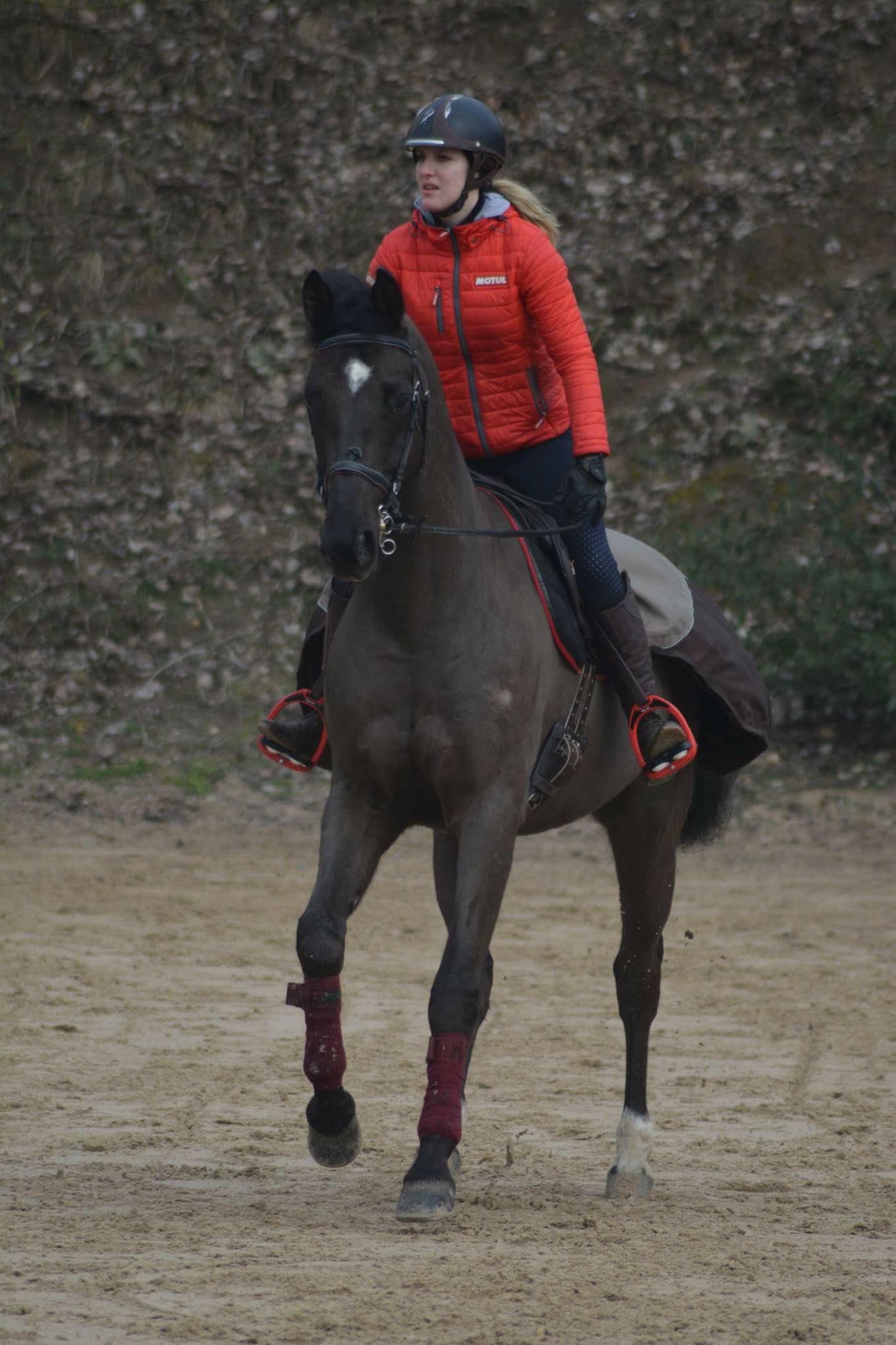 cheval_propriétaire