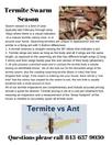 Termite Swarm Season