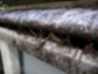 leafguard gutters dont work