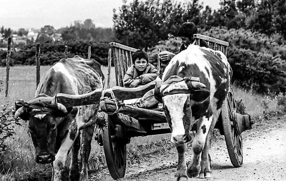 Volver con la carreta vacia