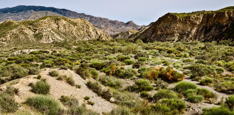 Tabernas desierto en primavera.jpg
