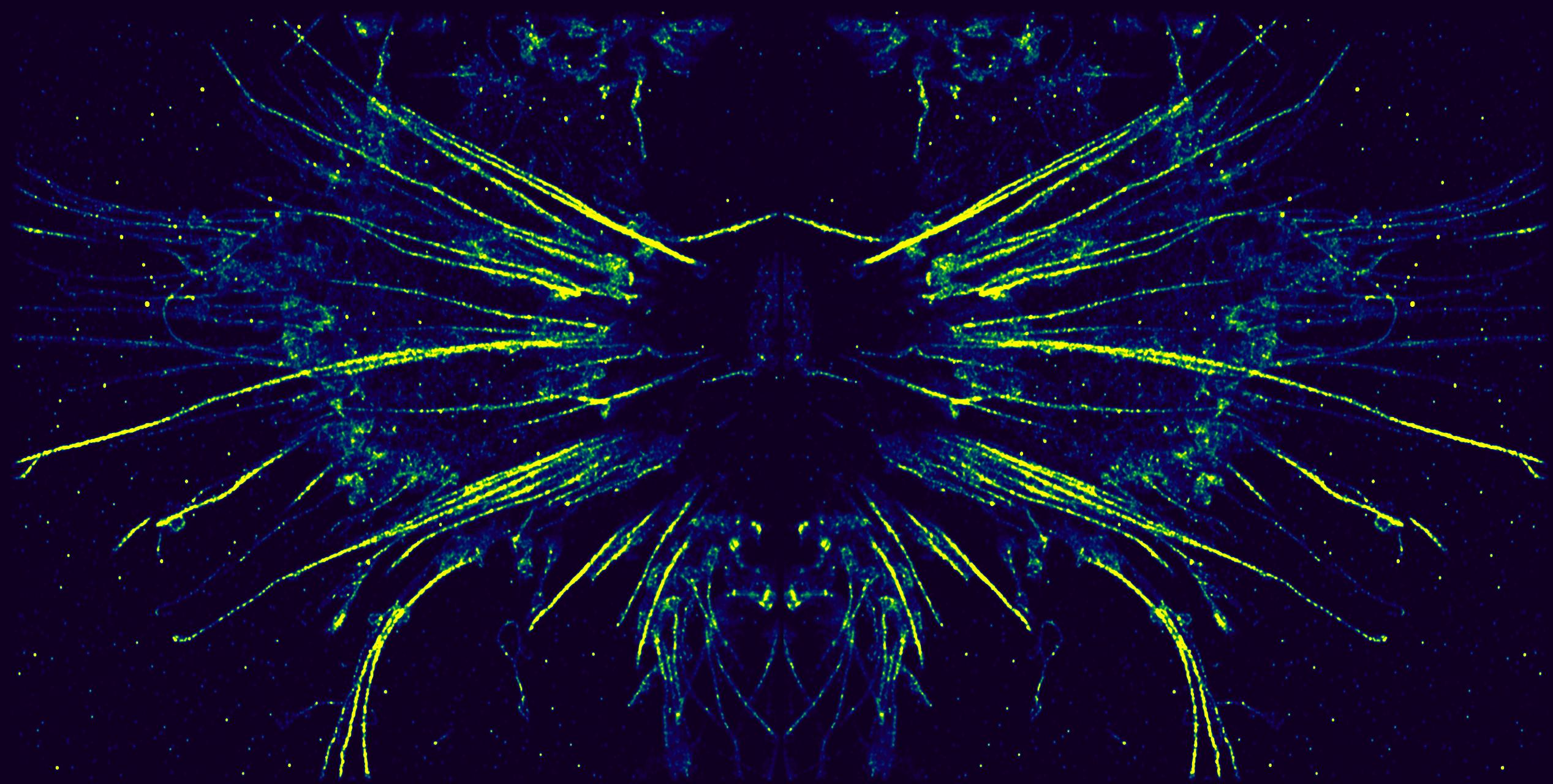 actinbug