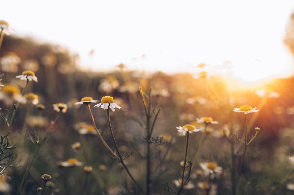 flowers (1 of 1)-13.jpg