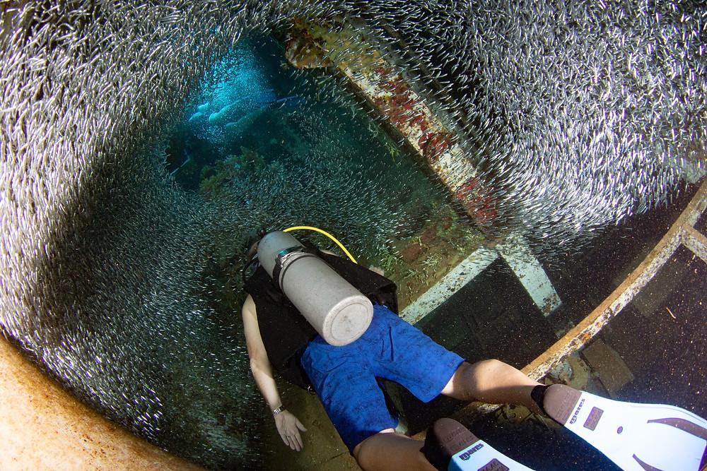 A scuba diver swimming through a school of silversides on the USS Kittiwake.
