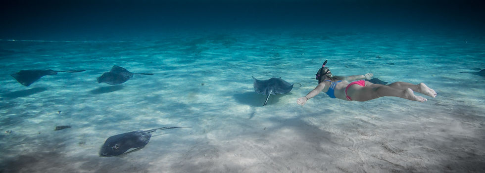 A snorkeler at Stingray City in Grand Cayman