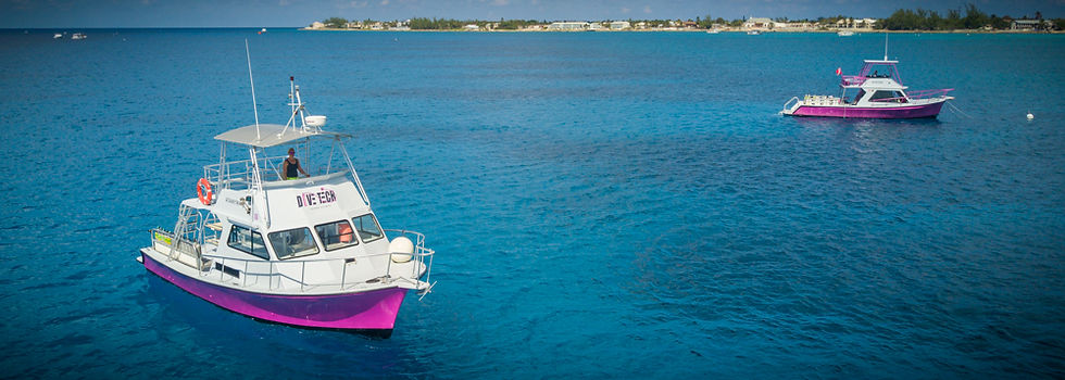 2 of Divetech's 36-foot pink Newton Dive Boats