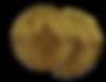Divetech Coins.png