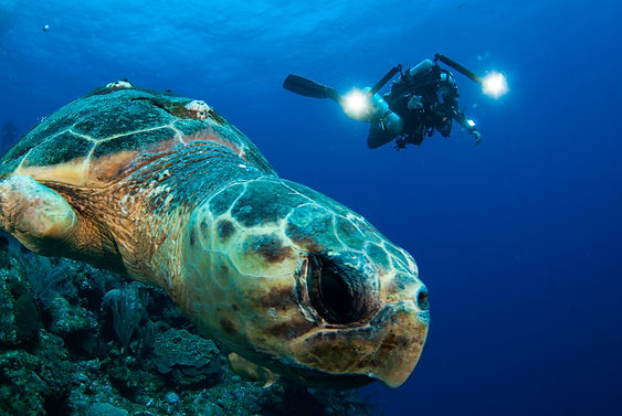 An underwater photographer takes a shot of a sea turtle in Grand Cayman.