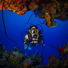 A scuba diver on Grand Cayman's main wall/reef.