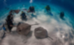 A group of divers at Stingray City, Grand Cayman.