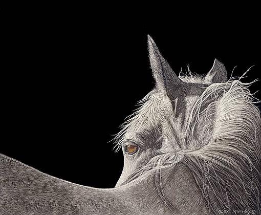 CABALLO BLANCO  18x25  original