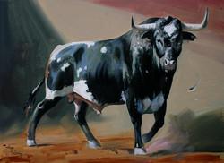 Spanish Bull