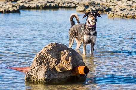 כלב מעורב במים