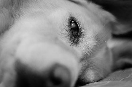 כלבה ישנה