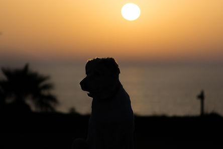סילואט של כלב