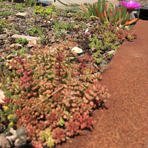 The raft has a living roof with salt and drought hardy suculants and sedums.