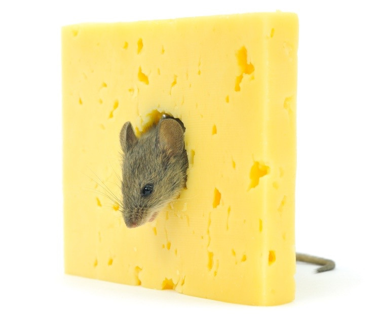 How's your cheese?