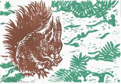ronner-eichhörnchen