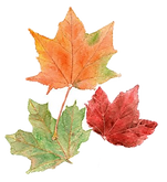 fall leaves_edited_edited.png