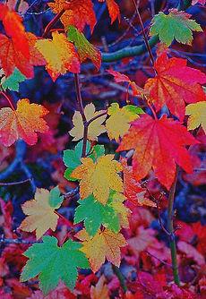 neon-leaves-rebecca-renfro.jpg