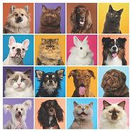 Pet Zoom Blessing.jpg