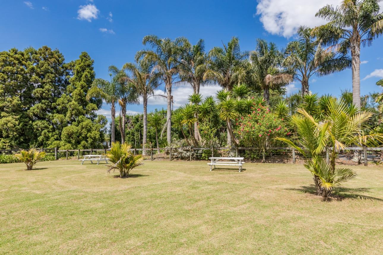 Tropical Park Setting