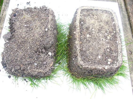 Fertiliser Results Strong Roots