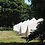 Thumbnail: 6 Bed Bell Tent
