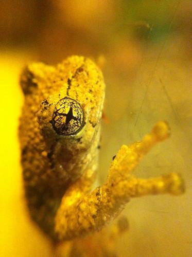 Macro of Frog's Eye