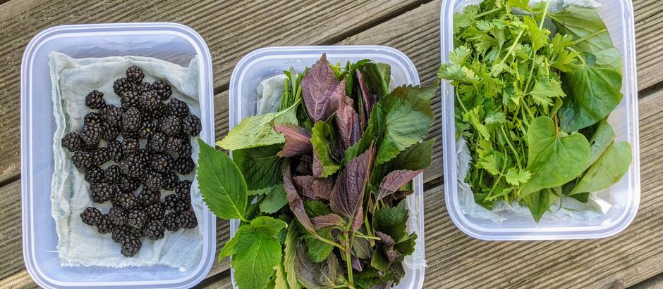 Jak uchovávat bylinky?