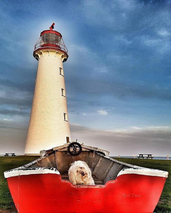 Island Photographer and her Dogs Make Islanders Smile
