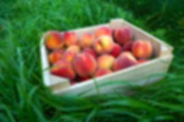 Crate of Peaches