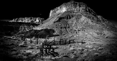 Catle roundup Utah