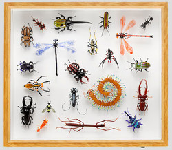insect-collection-2015_1