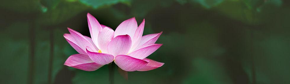 Ksama Lotus.jpg