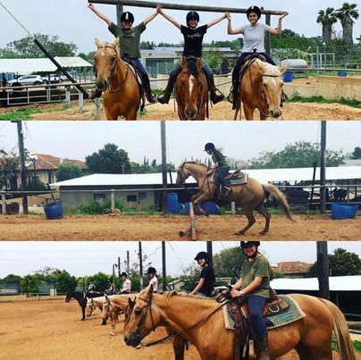 פנסיון לסוסים החווה של בני