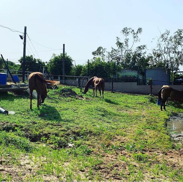 פנסיון לסוסים באזור השרון