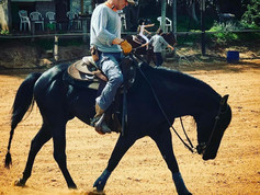 אילוף ופנסיון סוסים כפר סבא
