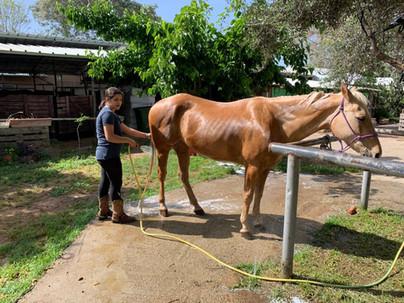 פנסיון ואילוף סוסים חוות סוסים בשרון שדה ורבורג