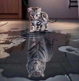 confidence-reflection-cat-tiger-motivati