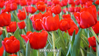 Tulip-Flower-at-Esplanade-Ratchada_2.jpg