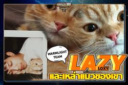 ปก ต้าวแมวของ Lazyloxy