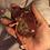 Thumbnail: Kidney