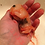 Thumbnail: Rabbit fetus