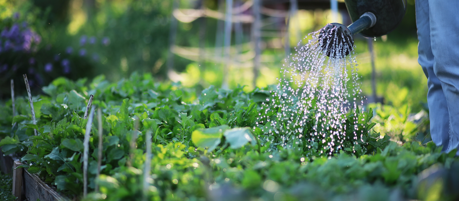 Gardening in the Middle of a Worldwide Pandemic