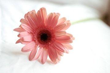 flowers-1546670.jpg