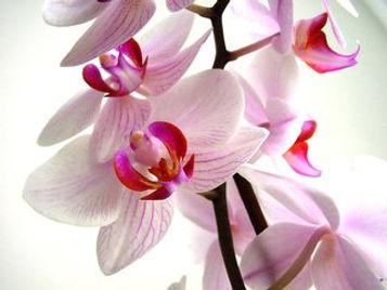 flowers-1525322.jpg