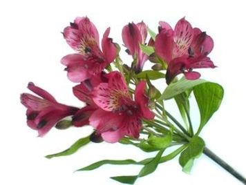 flower-1310080.jpg