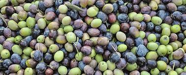 olives_4.png