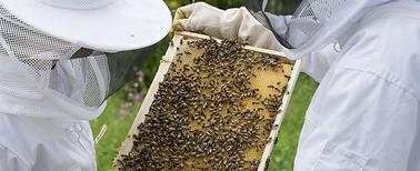 beekeeping_4.png